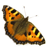 The butterfly. Stock Image