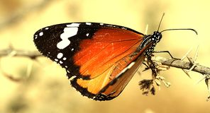 Butterfly. Beautiful butterfly in the garden. Insect stock photo