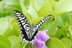 Butterfly. White black butterfly stay on flower stock photo