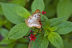 Butterfly. On flower Royalty Free Stock Image