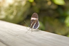 Butterfly. On wood Royalty Free Stock Photography