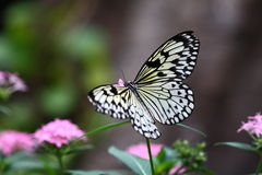 Butterfly. Stays at a flower royalty free stock photo