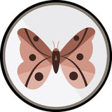 Butterfly. Beautiful butterfly in the coloring Royalty Free Stock Photos