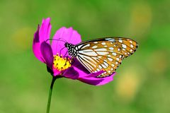 Butterfly. On a flower in the garden Royalty Free Stock Photography