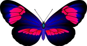 Butterfly. Tropical butterfly on white background royalty free illustration