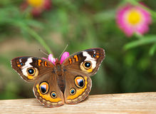 Butterfly. On wood, sitting, color image Stock Photos