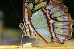 Butterfly 4. Butterfly sitting on an orange Stock Photo