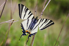 Free Butterfly Stock Images - 40201444