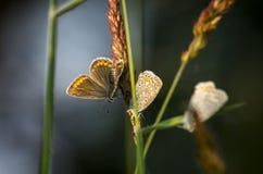 Butterfly4 Photos libres de droits