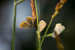 Butterfly4 Fotografie Stock Libere da Diritti