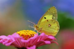 Free Butterfly Stock Photo - 4119280
