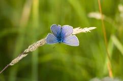 Butterfly1 zdjęcia stock