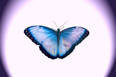 Butterfly. Butterflies, insects, beauty, nature, wings, blue Royalty Free Stock Photography