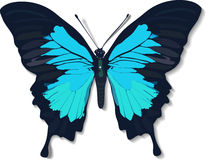 Butterfly. A blue butterfly in vector style Royalty Free Stock Photo