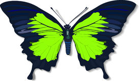 Butterfly. A green butterfly in vector style Royalty Free Stock Photo