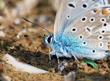 Butterfly. On plant in meadow stock photo