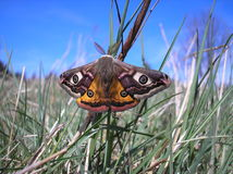 Free Butterfly Royalty Free Stock Photography - 4605317