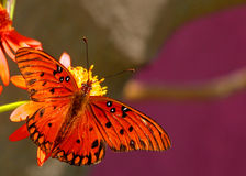 Butterfly. Butterly in its natural setting royalty free stock photo
