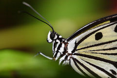 Free Butterfly Stock Photography - 4752302