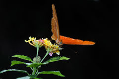 Butterfly. A beautiful butterfly stays on flowers stock photos