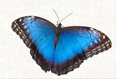 Free Butterfly Stock Photo - 48921310