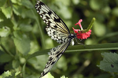 Butterfly. Resting/getting necter from flower royalty free stock photography