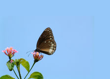 Butterfly. Insects Stock Photo