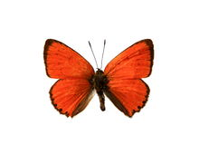Free Butterfly Royalty Free Stock Image - 5258056