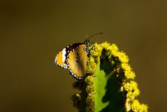 Butterfly. Sitting on a cactus Stock Image