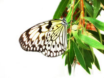 Butterfly. On branch Stock Image