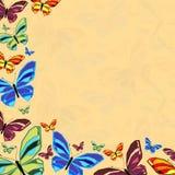 Butterfly6 Arkivfoton