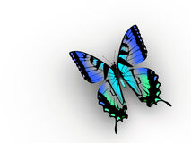 Butterfly. A blue butterfly on white background - 3d render stock illustration