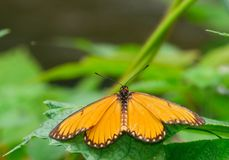 Butterfly. The butterfly fall a plant Royalty Free Stock Images