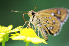 Butterfly. The butterfly fall a plant Royalty Free Stock Photography