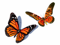 Butterfly Royalty Free Stock Images