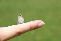 Butterfly. Human and nature - close-up shoot of a beautiful blue butterfly on woman hand Royalty Free Stock Image