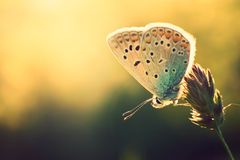 Free Butterfly Stock Images - 56627284