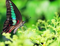 Butterfly. The butterfly on the leaf .it looks very beautiful Royalty Free Stock Images