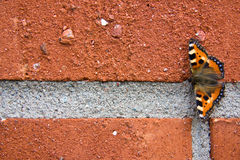 Butterfly. Wonderful butterfly sitting on brick wall Stock Photos
