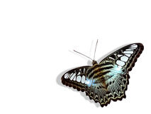 Butterfly. Tropical butterfly on a white background royalty free stock photo