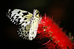 Butterfly. Sitting on a flower Stock Image
