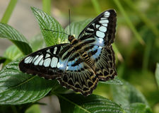 Butterfly. A beautiful butterfly Royalty Free Stock Photo