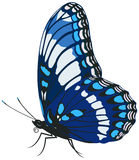Butterfly. On the white background Vector Illustration
