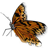 Butterfly. Real butterfly stock illustration