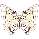 Butterfly. On the white background Royalty Free Illustration