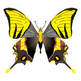 Butterfly. On the white background Stock Illustration