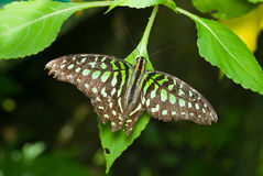 Butterfly Stock Photos