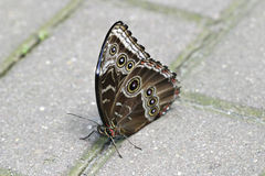 Butterfly. Resting on a concrete royalty free stock image