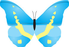 Butterfly. There is butterfly with blue wings Stock Photography