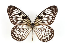 Free Butterfly Stock Images - 6975624